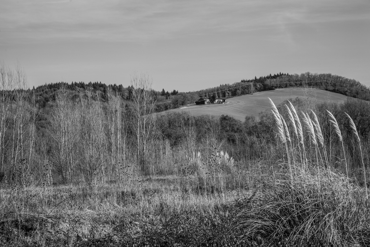 _MG_0025paysage bessiere