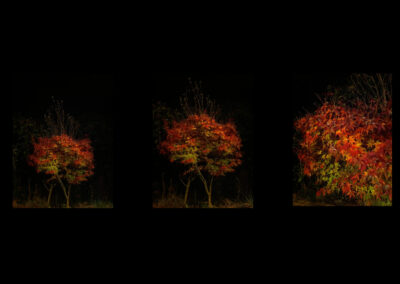 serie toulouse nov 20124
